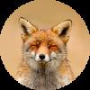 HTTP/HTTPS/SOCKS прокси от 11 рублей в день - последнее сообщение от ProxyFoxy